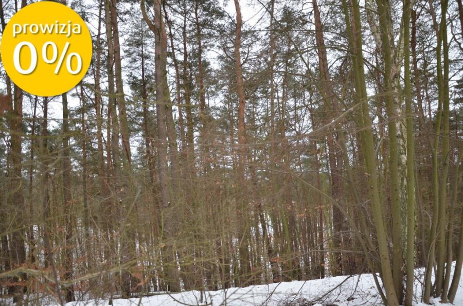 Działka leśna Czarnków
